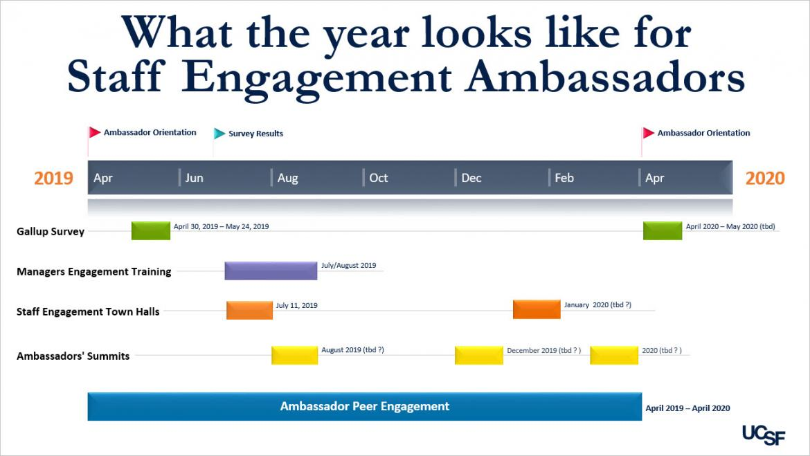 What the year looks like for  Staff Engagement Ambassadors